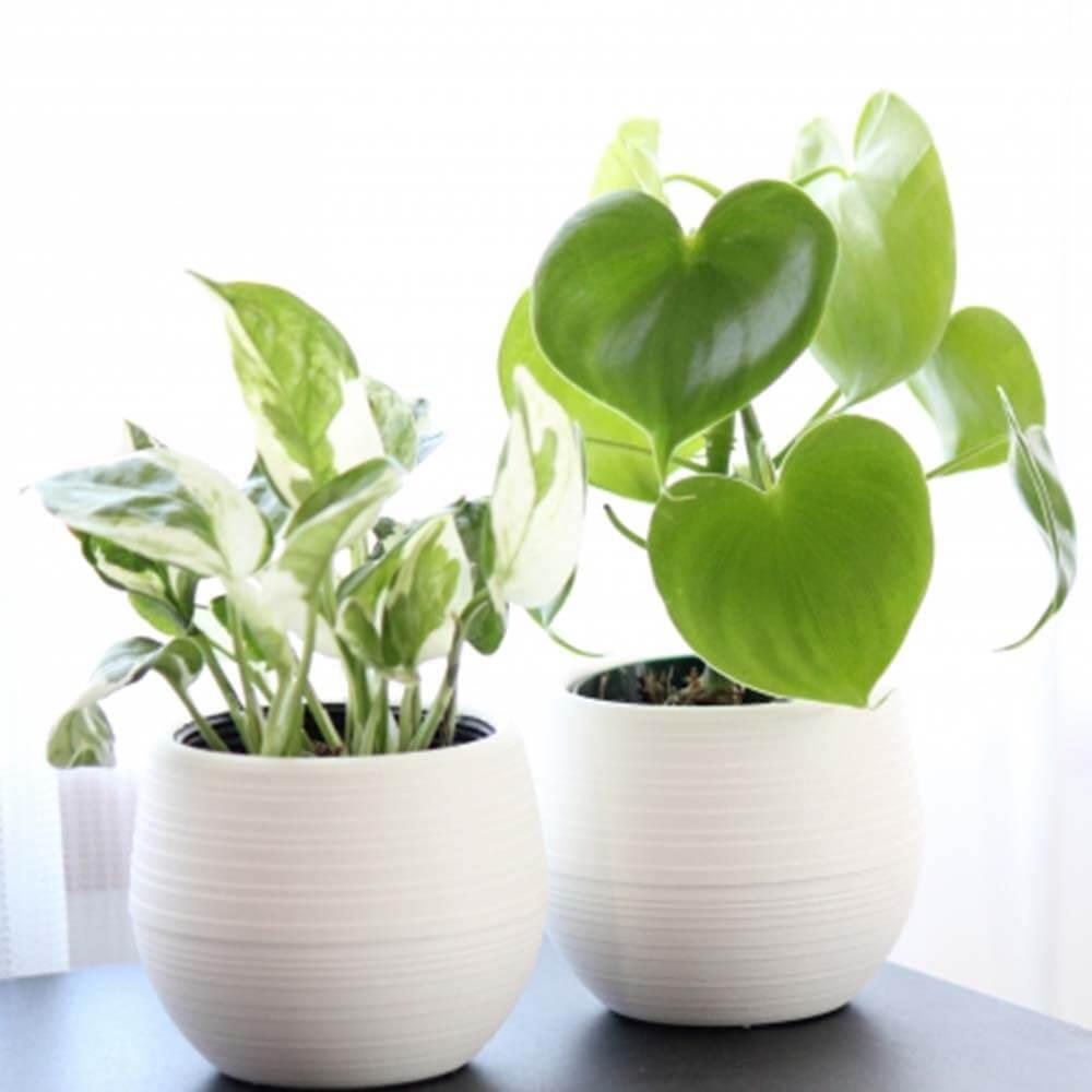 開運|新365日誕生日占い.com [無料占い] 観葉植物